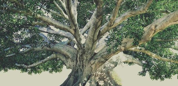 arbonne tree